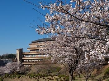 桜花と楽友会の建物
