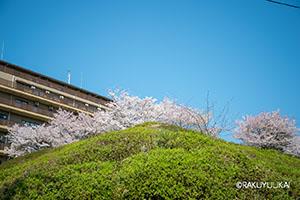 山王下緑地の桜と楽友会の建物